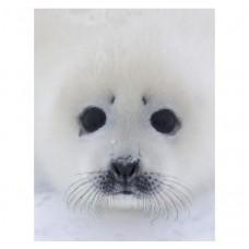 Тюлень Paro большой